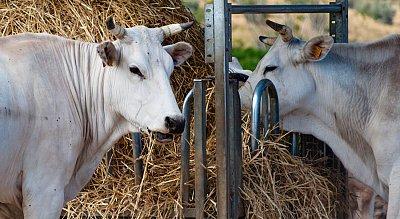 Agritourisme Al Girasole Orbetello