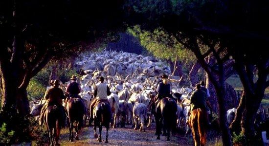 Farm Holiday Terre Regionali Toscane