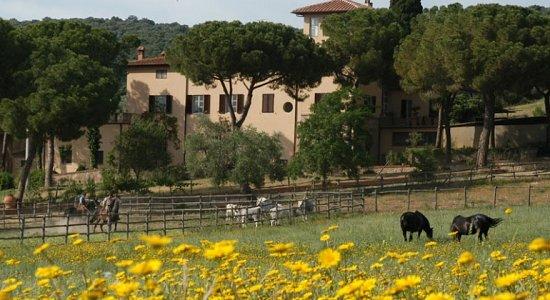 Bauernhof Corte degli Ulivi Roselle Terme