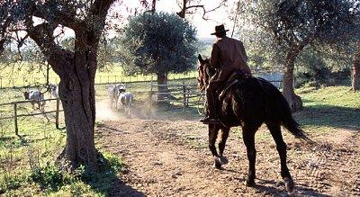 Agritourisme Corte degli Ulivi