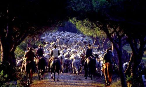 Centro Equitazione Terre Regionali Toscane -  ()